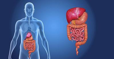 Organ nou, identificat în corpul uman!