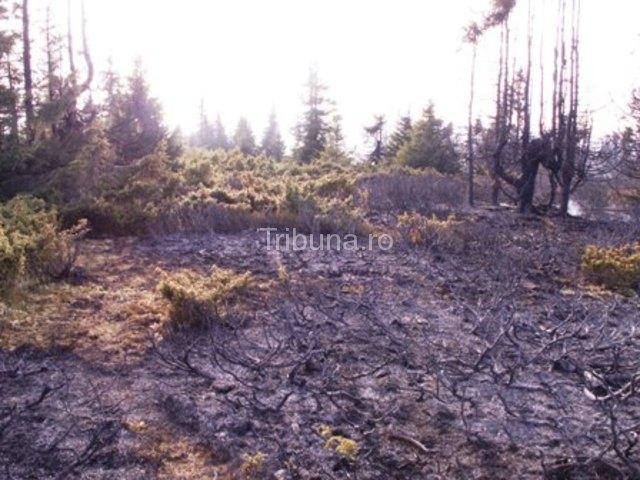 Zece mii de incendii la vegetaţie uscată în 10 luni