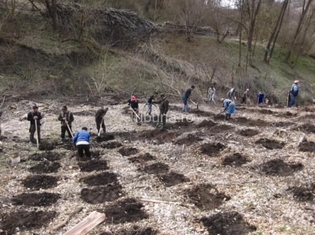 Ocolul Silvic Mediaş -  împăduriri şi completări pe 25 hectare