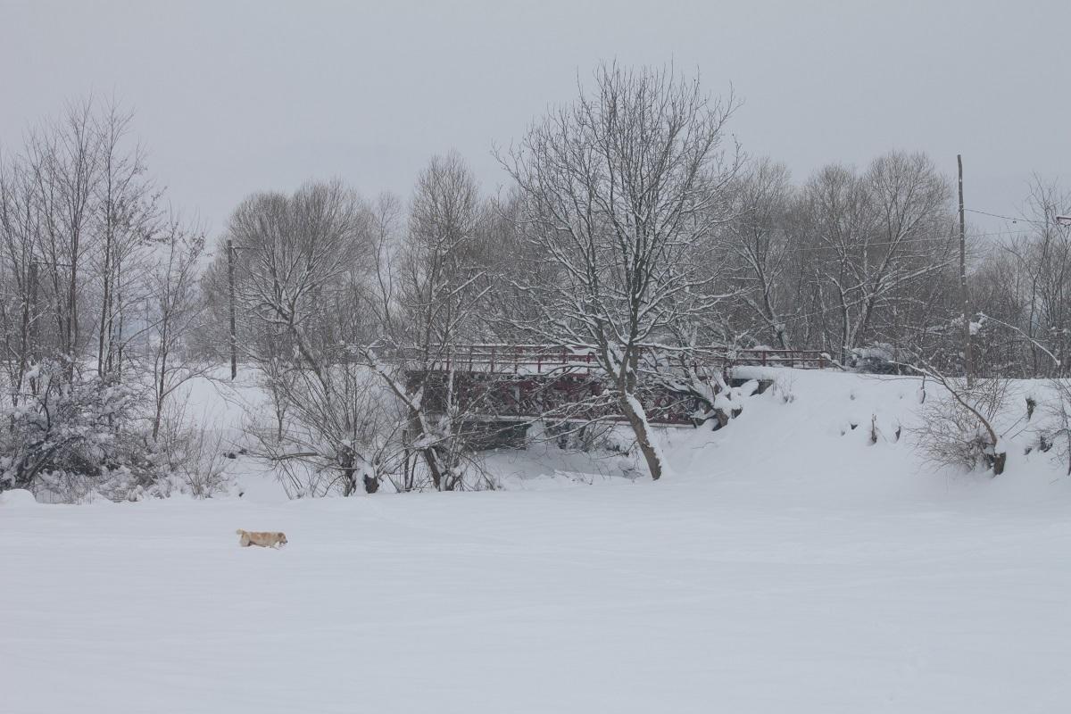 Intensificări ale vântului și zăpadă spulberată la munte. Cod galben de frig