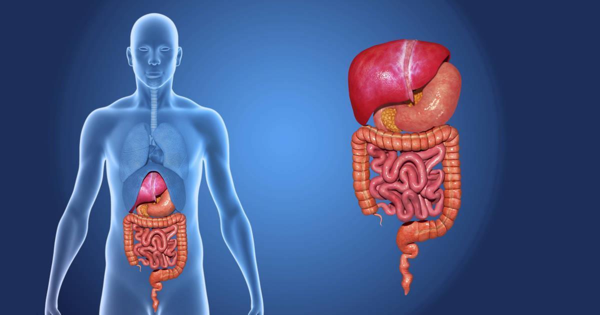 Organ nou, identificat în corpul uman! | Tribuna de weekend | Tribuna