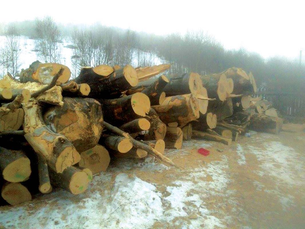 O firmã din Poiana Sibiului, amendatã cu 20.000 de lei pentru expediere de lemn fãrã acte