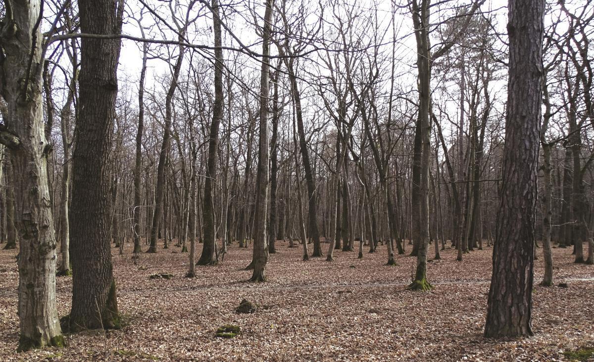 Romsilva câştigă procesul. Biserica pierde 166.000 de hectare de pădure