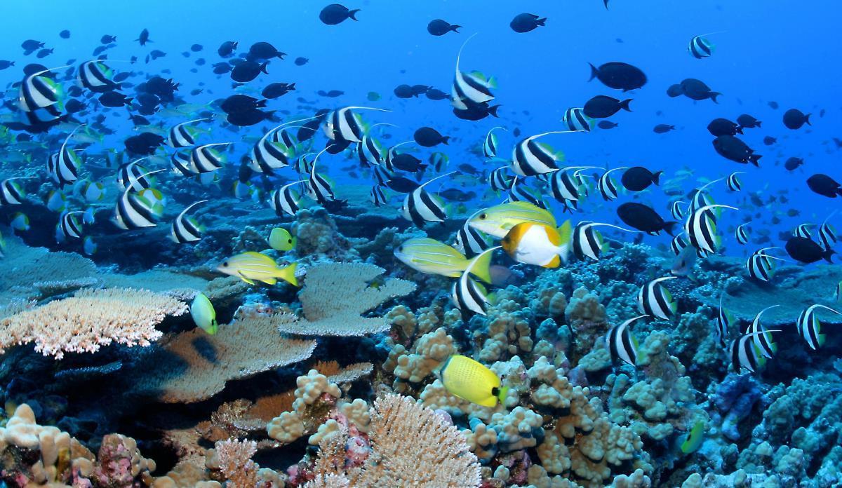 """Pericol pentru oceanele lumii: """"Sunt pe punctul de a rămâne fără oxigen"""""""
