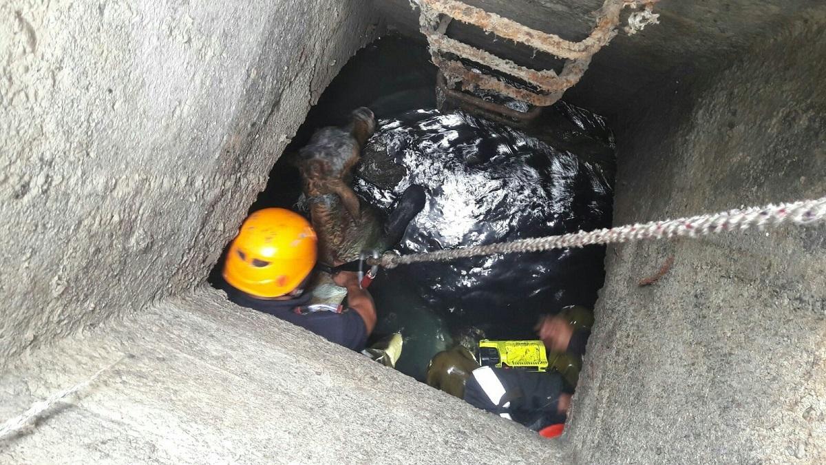 FOTO: Pompierii au salvat un viţel care a căzut într-un canal, în Broscărie