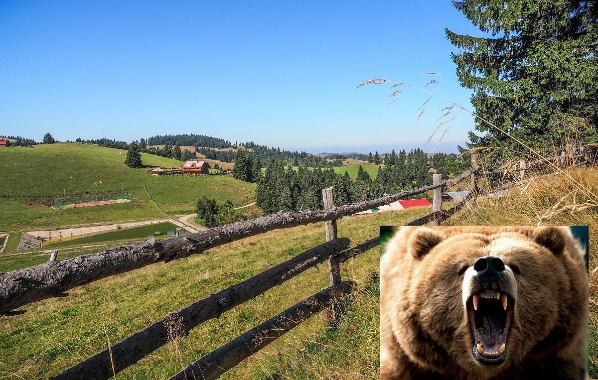 Urşii au făcut prăpăd la Crinţ: 19 vaci, doi cerbi şi un mistreţ au fost mâncaţi de fiarele sălbatice
