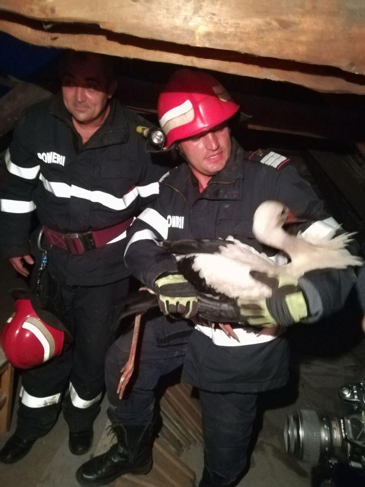 FOTO: Pompierii au salvat o barză rănită