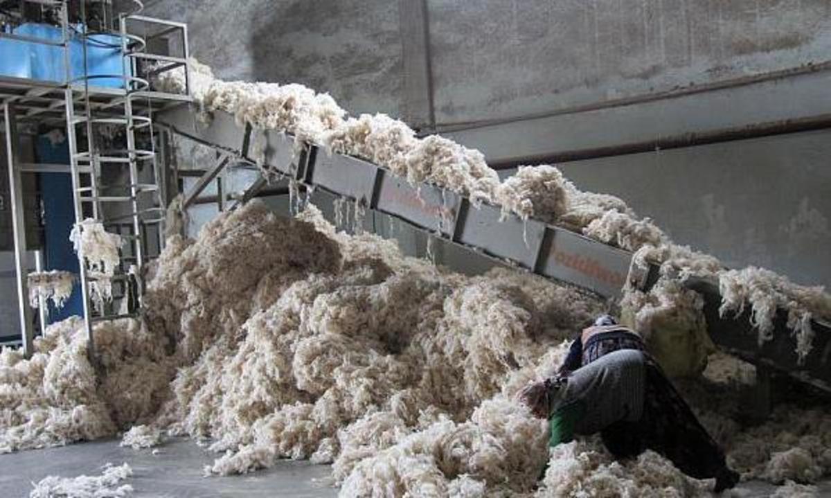 Oierii sibieni, recordmeni la subvenţia pentru lână!