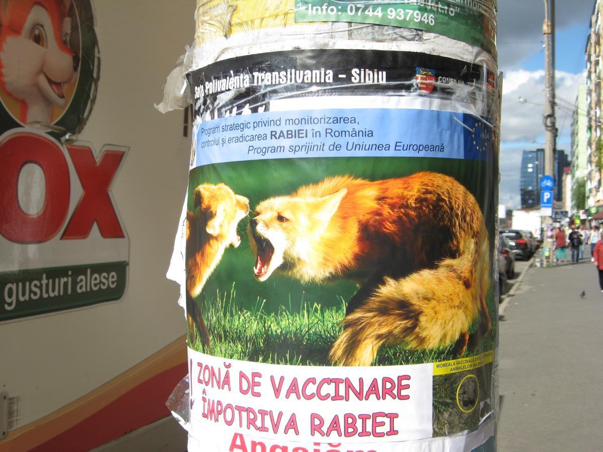 Într-adevăr, pe Mihai Viteazu e plin de vulpi...