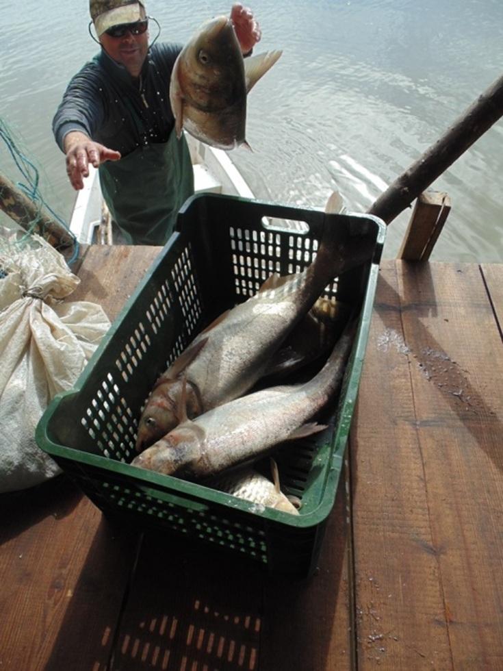 Lipovenii gătesc peşte şi repară plase, în Muzeul din Dumbrava Sibiului