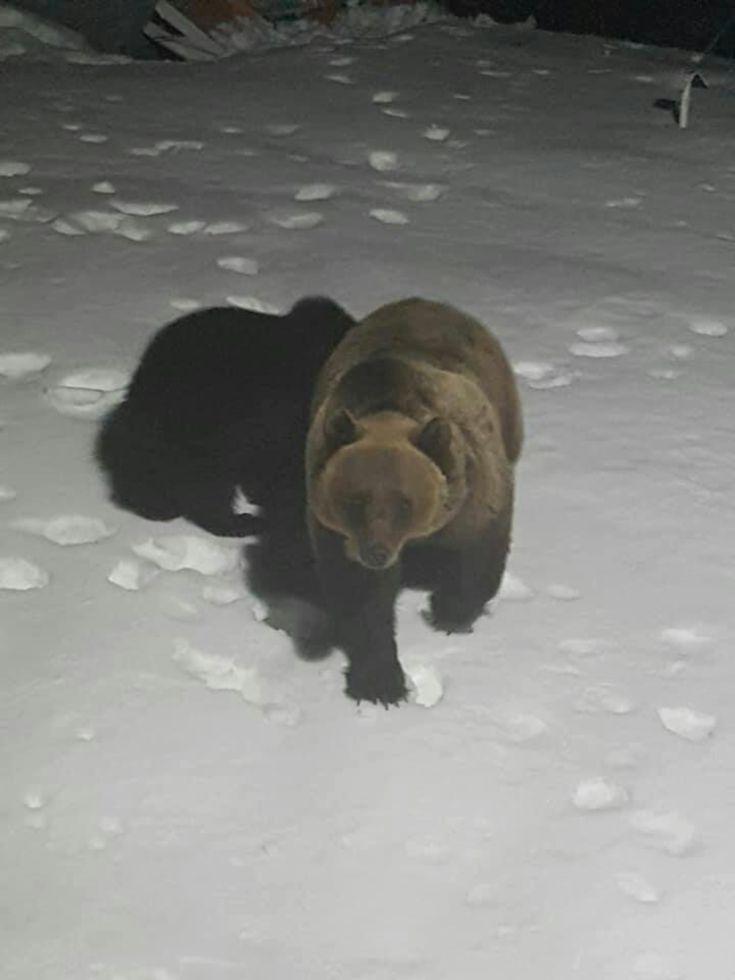 Urşii au vizitat Staţia Meteo de la Bâlea Lac
