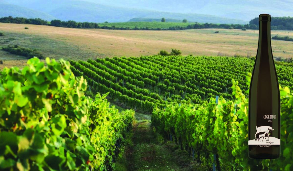 Povestea podgoriei Apold curge iar în pahare, prin vinul Gorgandin