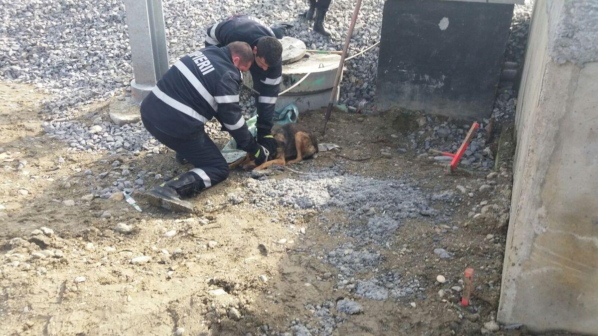 FOTO: Pompierii din Mediaș au salvat un câine căzut într-un canal
