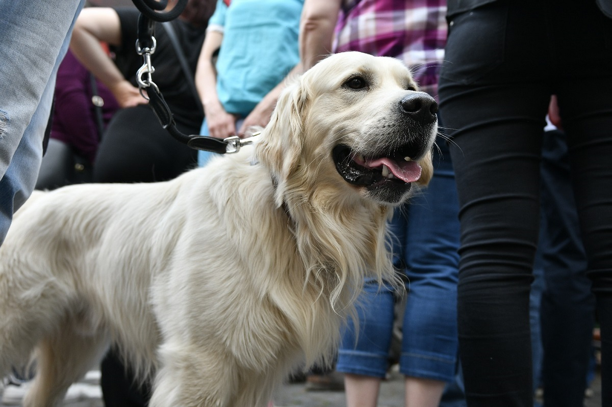 Plimbarea câinilor fără lesă, interzisă: 100 de plăcuțe de avertizare și amenzi de 300 lei