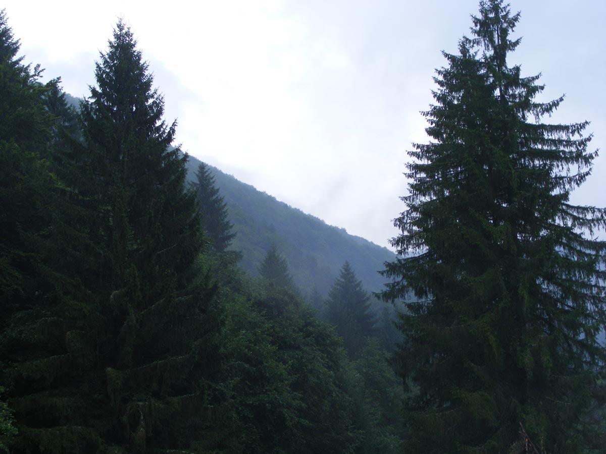 Primăvara aduce lucrări importante în pădurea Avrigului