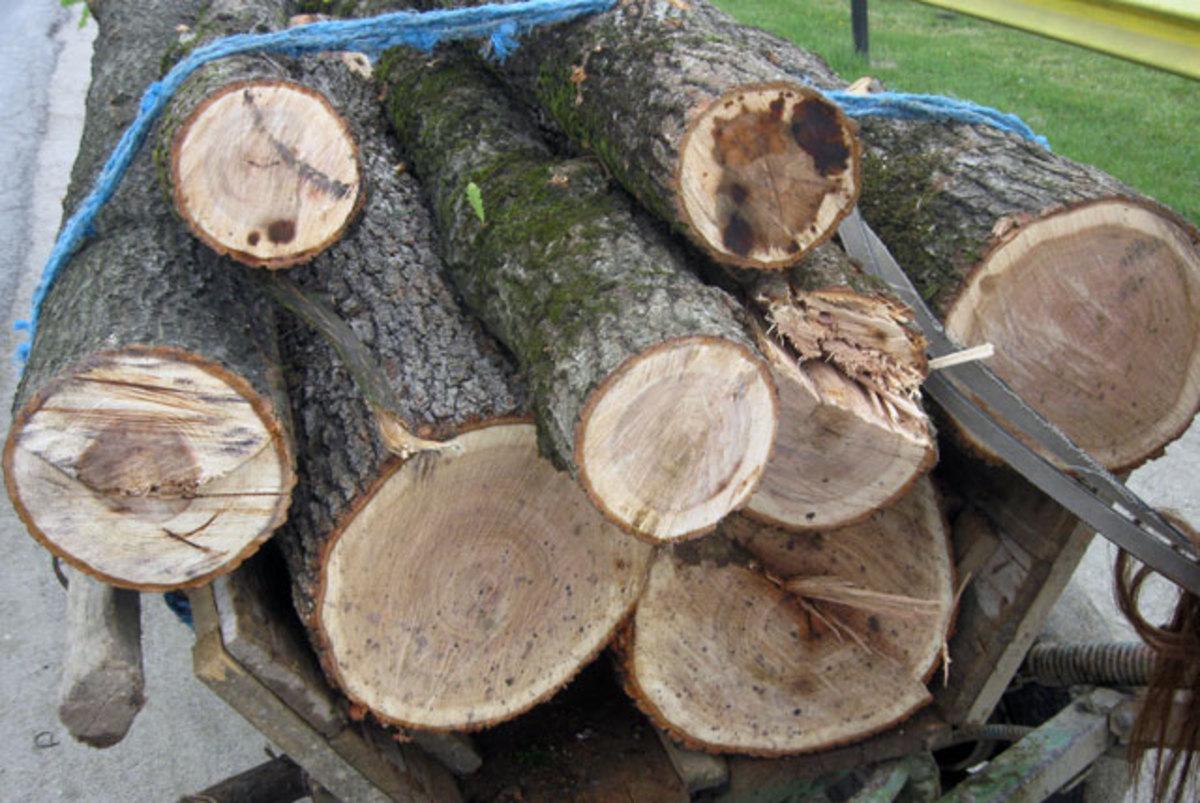 Amendați cu 16.000 de lei pentru că au tăiat 22 de stejari