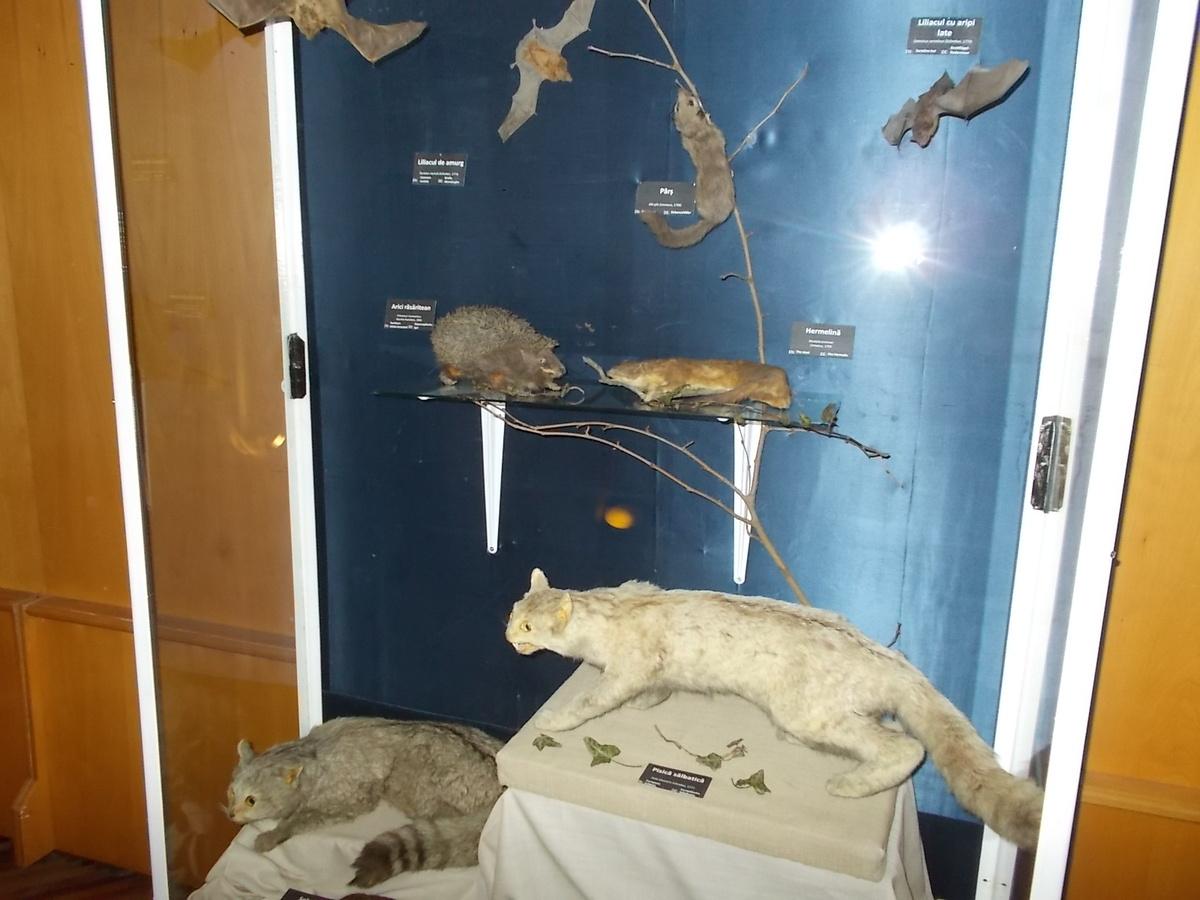 Tarantule, scorpioni și păsări răpitoare, într-o expoziție despre viețuitoarele nocturne