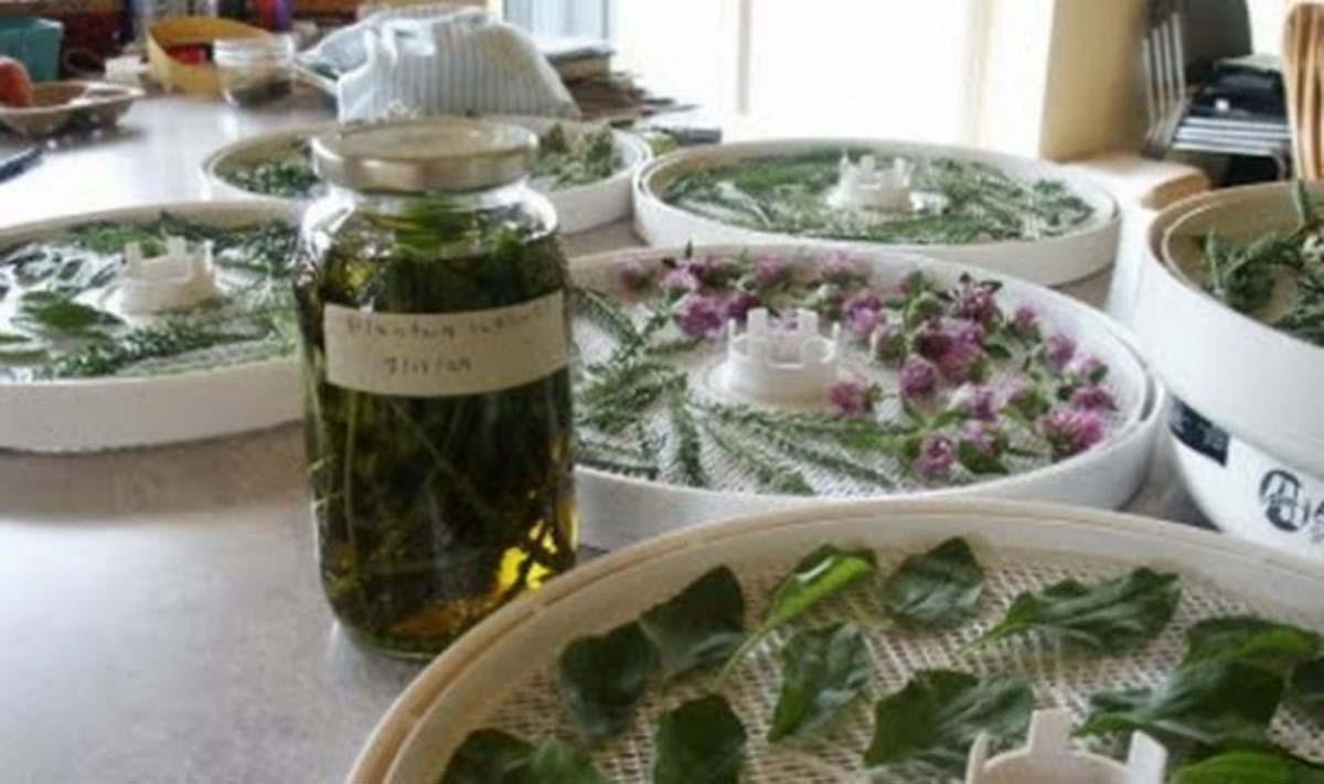 Medicina naturistă: Contraindicaţiile plantelor medicinale (I)
