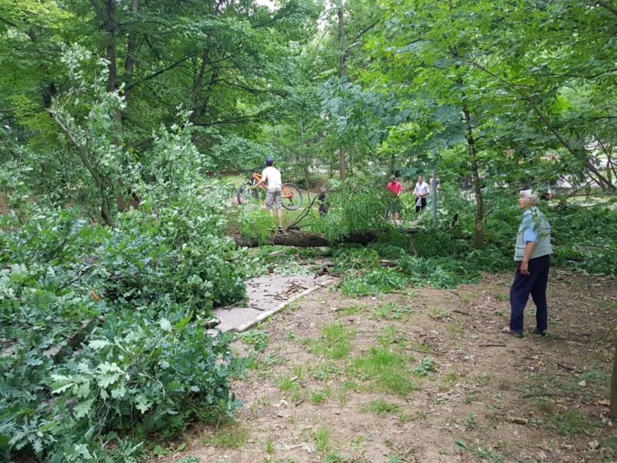 FOTO/ VIDEO: Pericol de moarte, în Parcul Sub Arini. Un copac a căzut pe o alee intens circulată