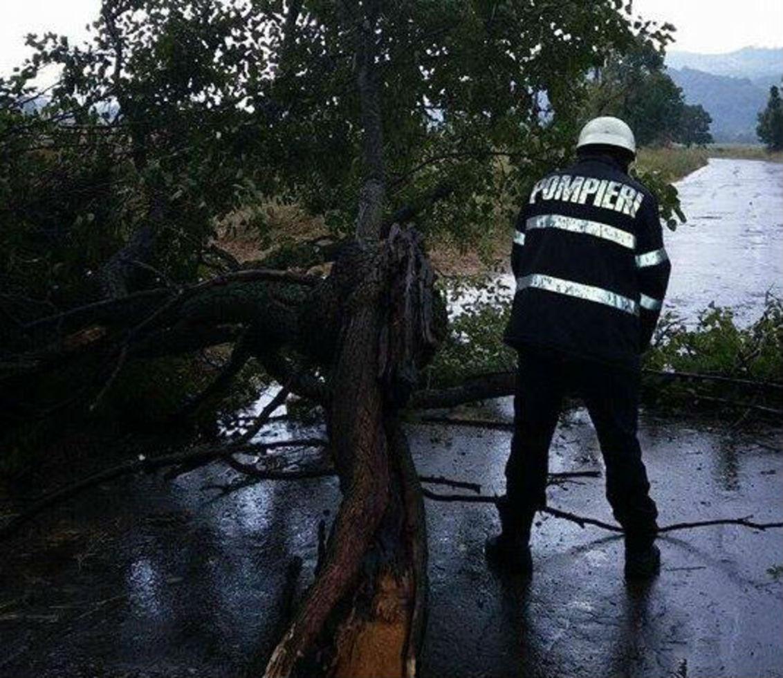 Furtuna a doborât un copac pe DN 14 A, între Mediaș și Blăjel